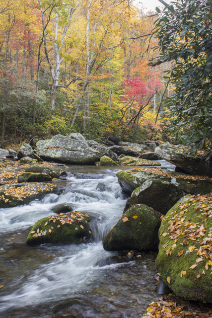 Little River fall colors above Elkmont. A Great Smoky Mountains fly fishing guide usually knows where the best fishing and scenery will be.