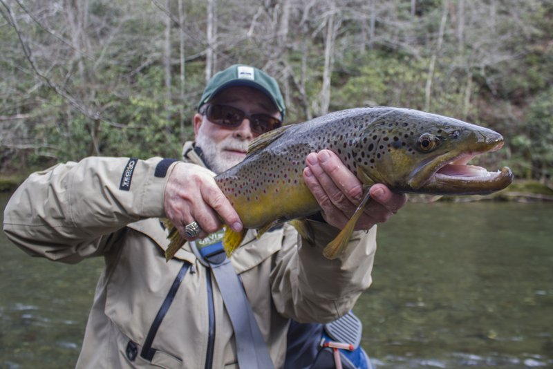 Trophy brown trout from Little River caught while fishing Great Smoky Mountains fly fishing guide David Knapp