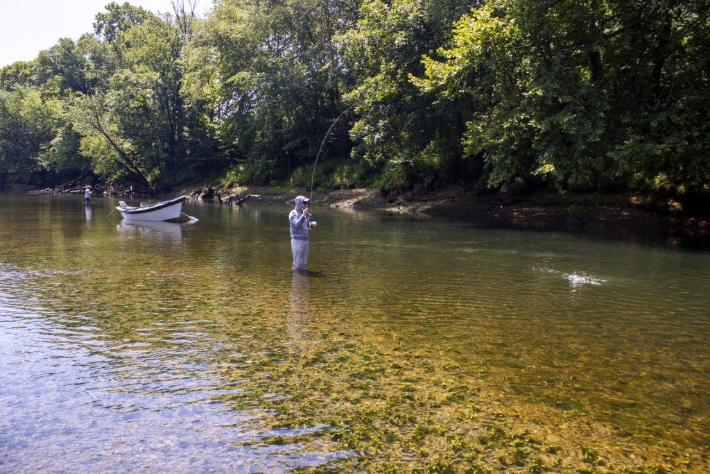 A good Caney Fork River fly fishing guide knows where to stop and wade fish