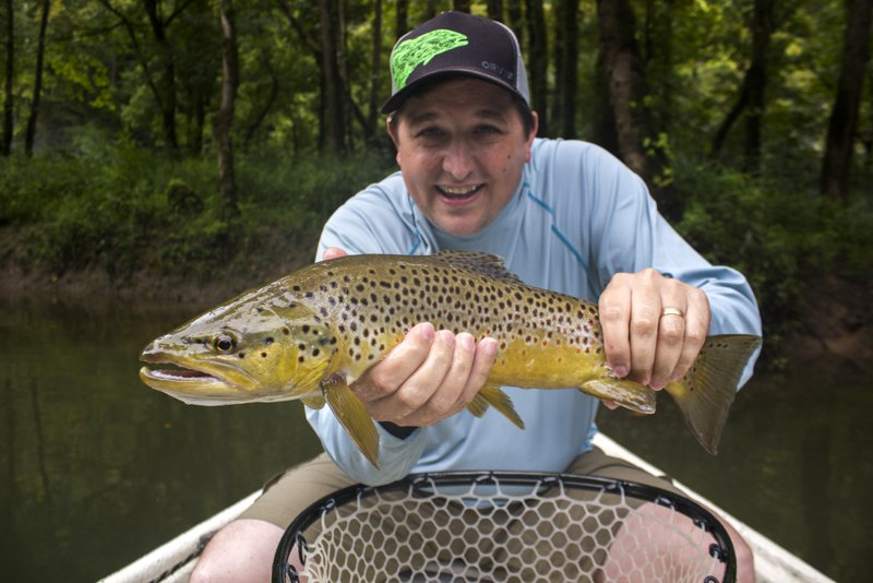 Terrestrial season Caney Fork River terrestrial eating brown trout