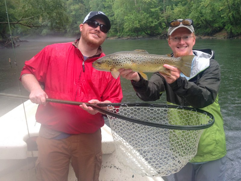 Caney Fork brown caught on a hopper during terrestrial season