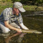 Trophy brown trout on the Caney Fork River