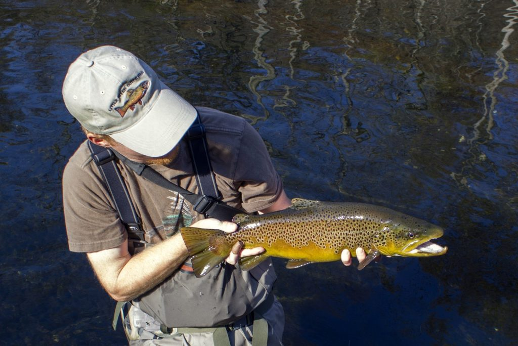 Trophy Clinch River brown trout