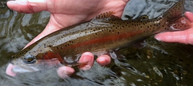 Great Dry Fly Fishing Opportunities Abound in the Smokies