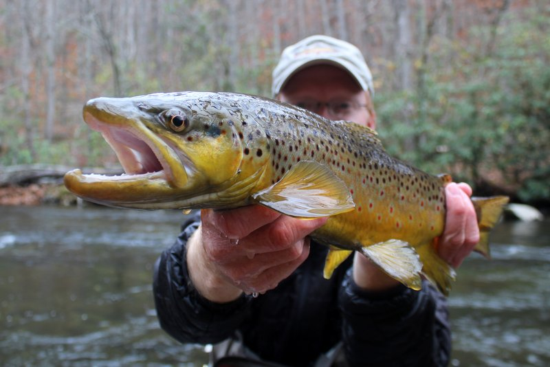 Great Smoky Mountains fly fishing guide David Knapp with a big brown trout on Little River