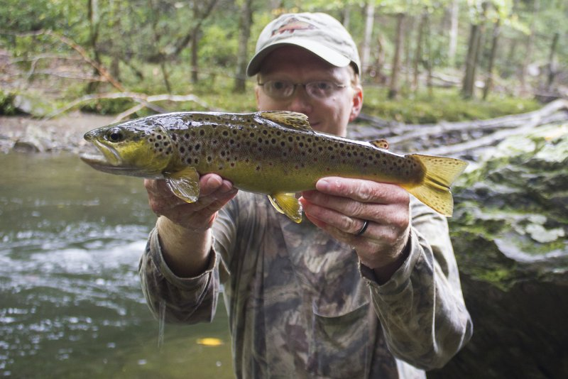 Another nice brown trout on Little River in the Smokies